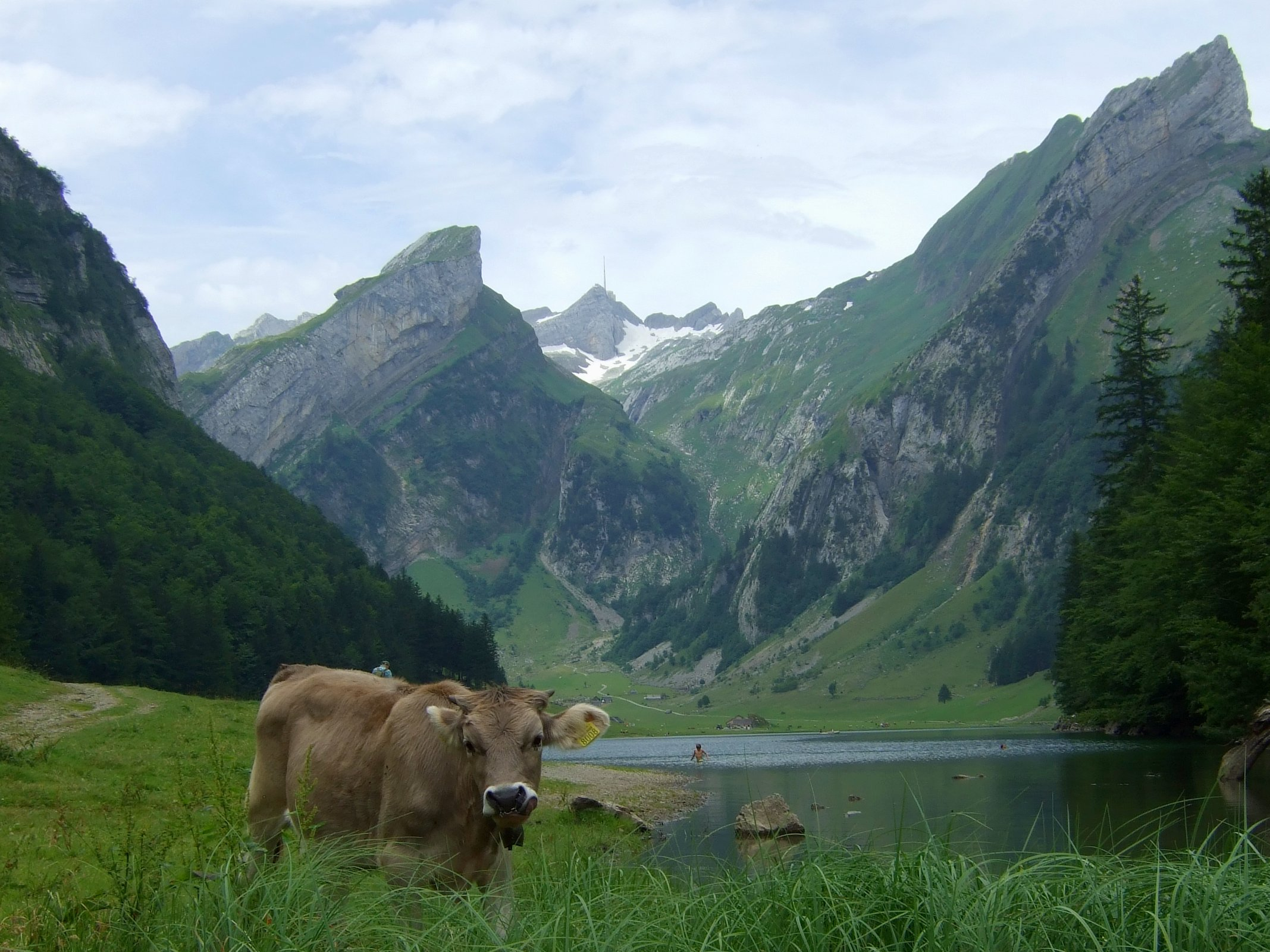 Die Kuh hat fünf Franken genommen, damit sie sich so hinstellt.
