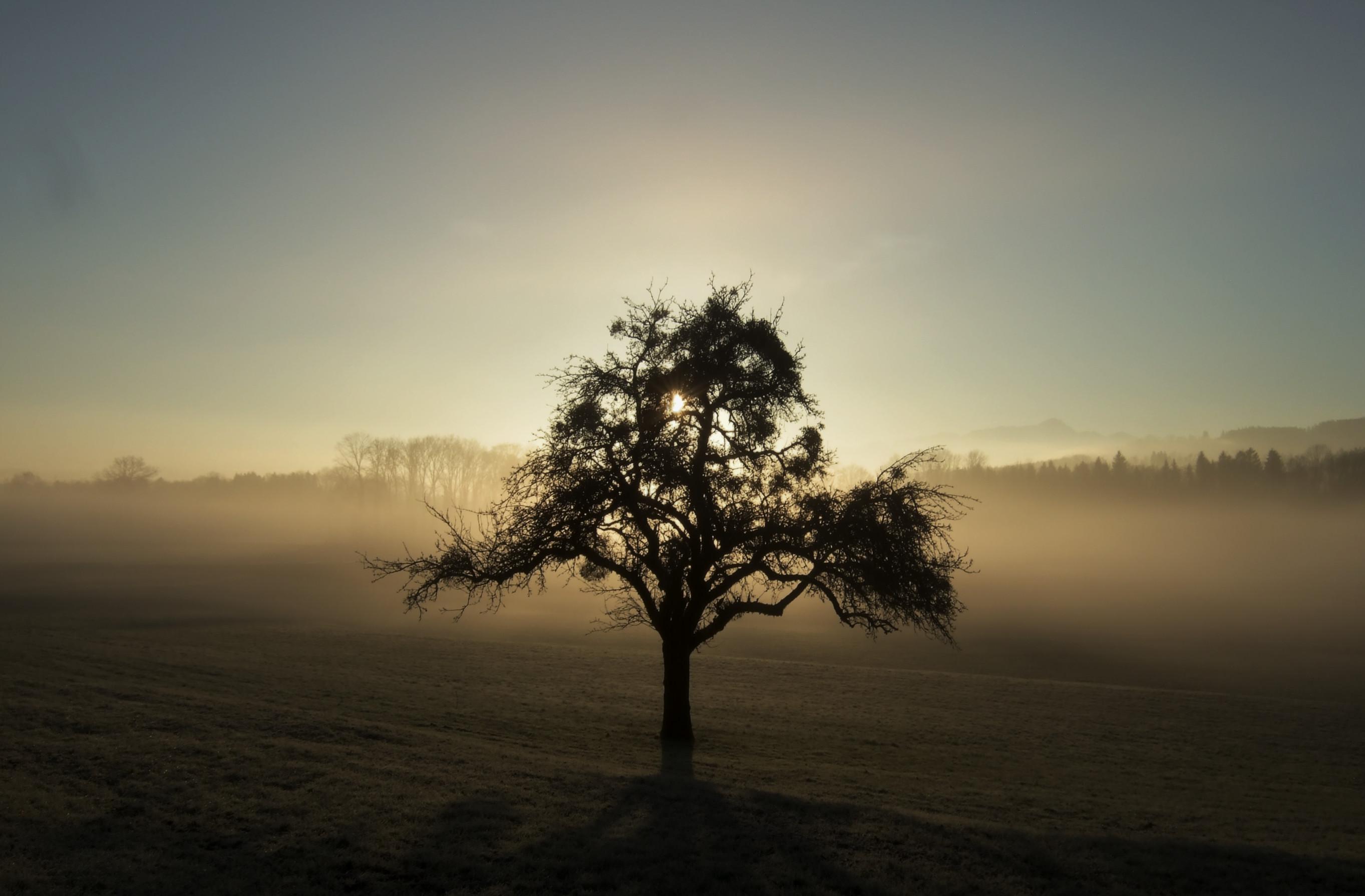 15.01.2014, Morgensonne in Weieren mit Säntis (HDR)