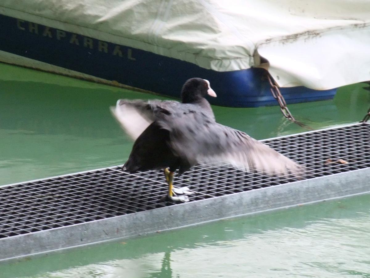 Ein Vogel beim Trockenschütteln.