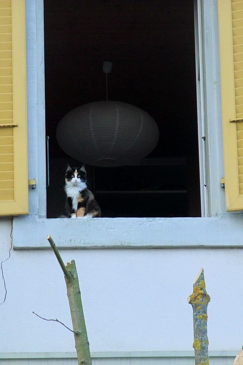 Eine zweisprachige Fensterkatze.