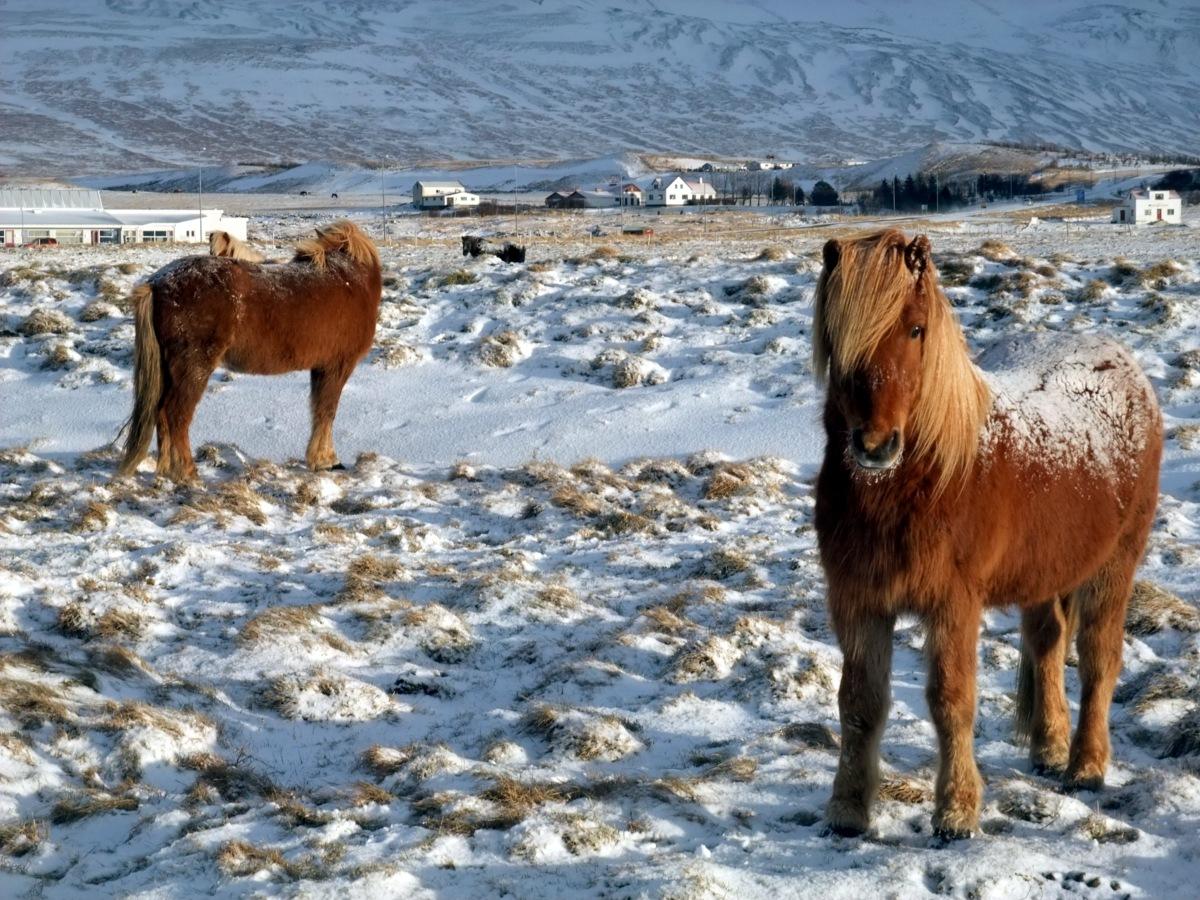 Daher kommt der Begriff Pony für den Frisurtyp.