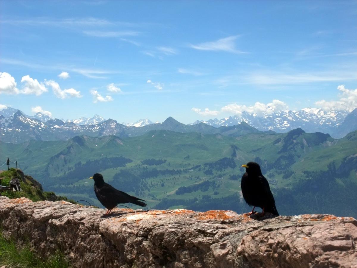 Zwei Vögel und jede Menge Berggipfel.