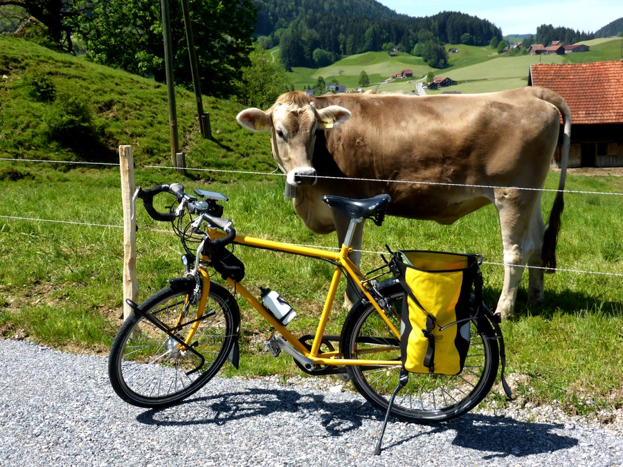 Was denkt so eine Kuh?