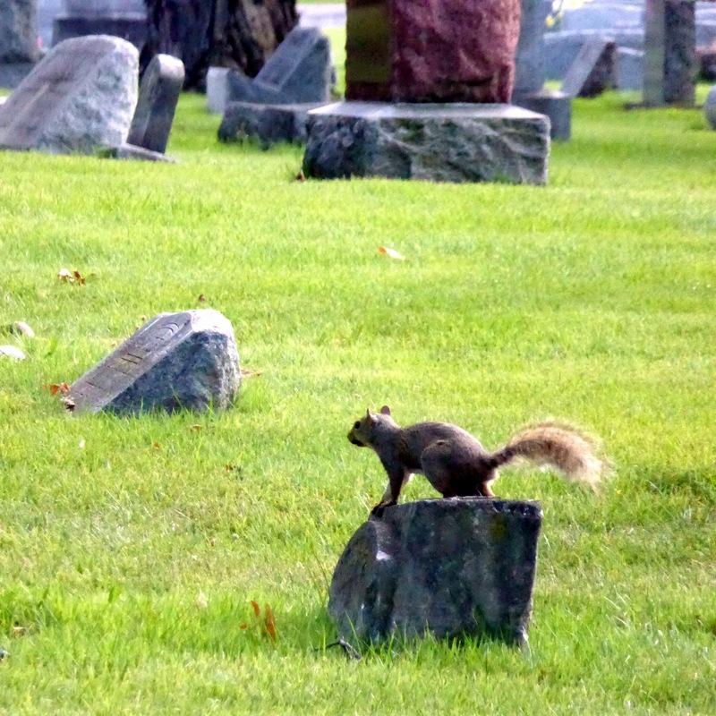 Ein Eichhörnchen auf dem Friedhof. Tierverbot!
