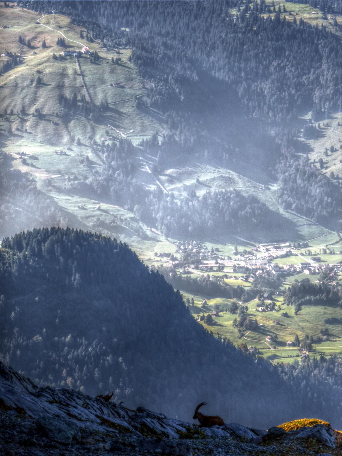 Blick ins Tal zwischen Säntis und Churfirsten, unten Steinböcke.
